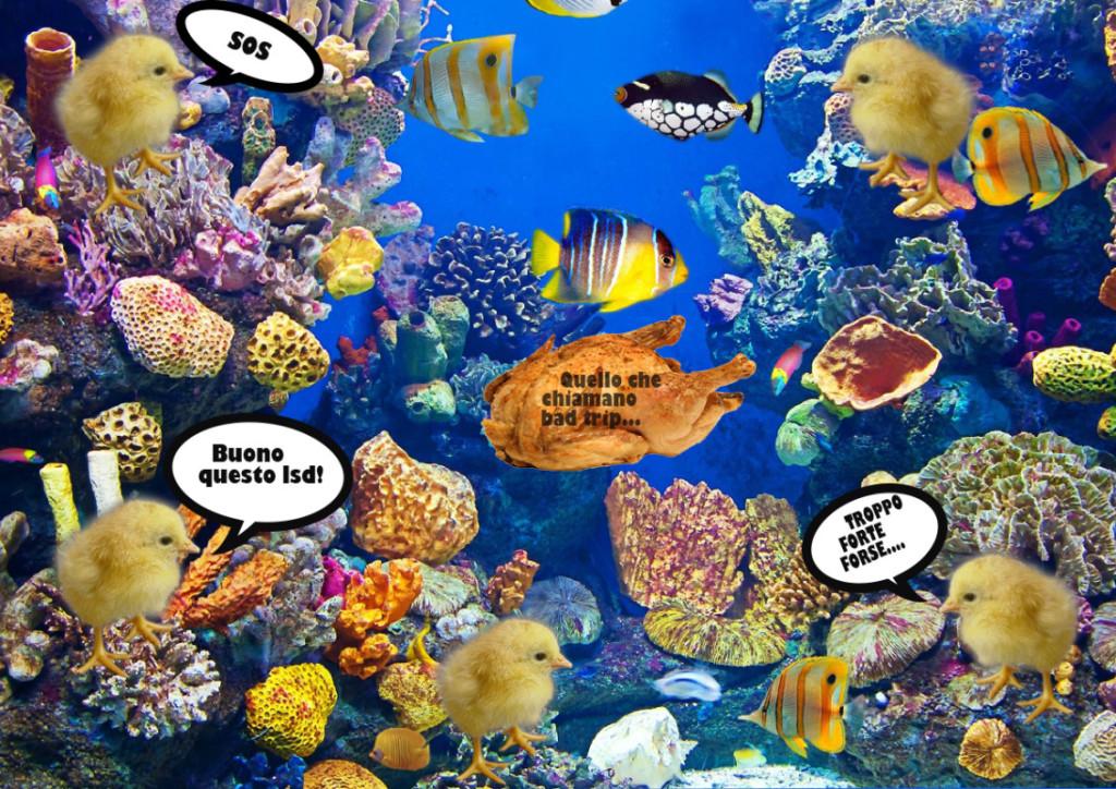 pulcini hanno mangiato ldd e si ritrovano in un acquario. Tra i pesci tropicali naviga un pollo arrosto, Bad trip.